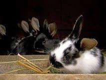 młodzi króliki zdjęcia stock