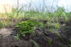 Młodzi krótkopędy greenery pod słońcem Zdjęcie Stock