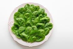 Młodzi liście szpinaki na talerzu kosmos kopii Detox, żywienioniowy karmowy składnik - zielony organicznie szpinak fotografia royalty free