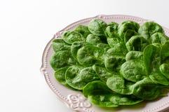 Młodzi liście szpinaki na talerzu kosmos kopii Detox, żywienioniowy karmowy składnik - zielony organicznie szpinak zdjęcia royalty free