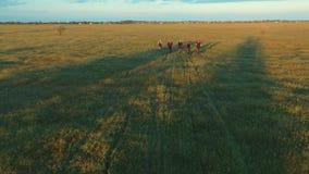 Młodzi ludzie jeździć na rowerze na bicyklach przez zielonego i żółtego lato łąki pola zbiory