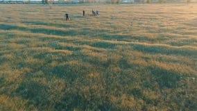 Młodzi ludzie jeździć na rowerze na bicyklach przez zielonego i żółtego lato łąki pola zbiory wideo
