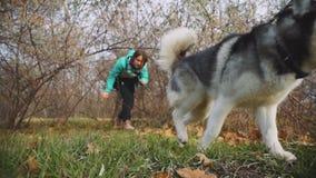 Młodzi piękni kobieta spacery, sztuki z jej husky psem w jesień lesie i zbiory