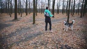 Młodzi piękni kobieta spacery, sztuki z jej husky psem w jesień lesie i zdjęcie wideo