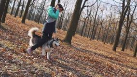 Młodzi piękni kobieta spacery, sztuki z jej husky psem w jesień lesie i zbiory wideo