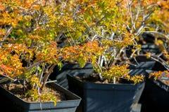 młodzi roślina garnki zdjęcie stock
