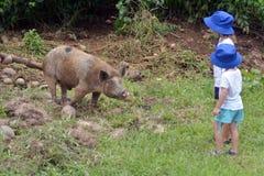 Młodzi siostrzani dziewczyn spojrzenia przy udomowiającą żeńską świnią Zdjęcie Stock