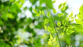 Młodzi tropikalni drzewo liście z miękkim światłem zdjęcie royalty free