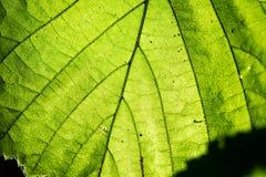 Młodzi wiosna liście na zielonym tle fotografia stock