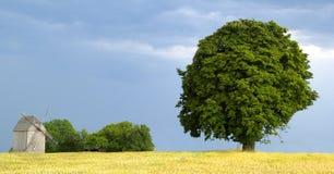 młyński wiatr Fotografia Stock