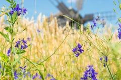 Młyn na pszenicznym polu Zdjęcia Royalty Free