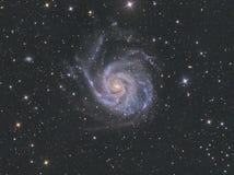 M101轮转焰火星系 免版税库存照片