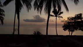 6 a M bij het Eiland van Zanzibar stock videobeelden