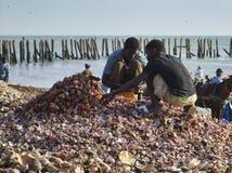 M`Bour fish market, near Saly in Senegal