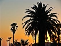棕榈在沙漠 库存照片