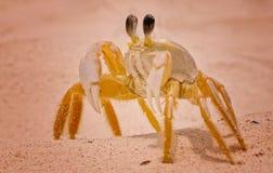 M. crabe sérieux Photos libres de droits