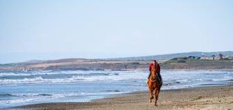 M??czyzna jazda na br?zu galopuj?cym koniu na Ayia Erini pla?y w Cypr przeciw szorstkiemu morzu zdjęcia royalty free