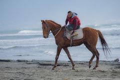 M??czyzna jazda na br?zu galopuj?cym koniu na Ayia Erini pla?y w Cypr przeciw szorstkiemu morzu fotografia stock