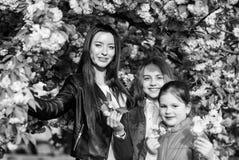 M?dchenkirschblumenhintergrund Fr?hlingsferien Familie nahe sonnigem Tag der zarten Bl?te Kirschbl?te-Blumenkonzept Park und lizenzfreie stockbilder