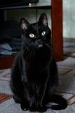 Mądry czarny kot Obrazy Royalty Free