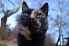 Mądry kot Obrazy Stock
