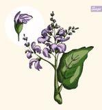 Mędrzec, koloru wektoru ilustracja Fotografia Royalty Free