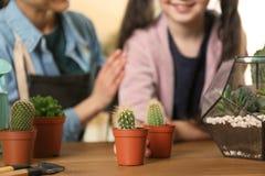 M?e e filha que tomam de plantas em pasta em casa imagens de stock royalty free