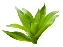 Beautiful bright fresh green leaves royalty free stock image