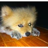 M?j pies zdjęcia royalty free