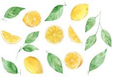 M?lad samling f?r vattenf?rg hand av citronen kan anv?ndas f?r utskrift och garnering royaltyfri illustrationer