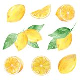 M?lad samling f?r vattenf?rg hand av citronen kan anv?ndas f?r utskrift och garnering stock illustrationer