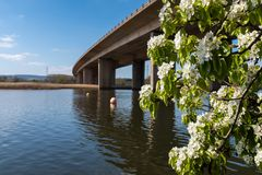 The M5 looms over the River Exe in Tospham, taken from underneath the motorway looking across the river and with a flowering bush. The M5 looms over the River royalty free stock image