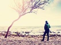M?me la promenade ? la ligne de rivage Arbre sur la fus?e du soleil de rose de littoral photographie stock
