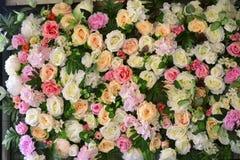 M?nga f?rger av rosor ser lyckliga royaltyfri bild