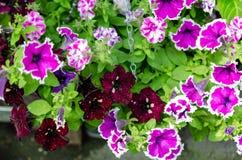 M?nga olika f?rger f?r blommor i sommar royaltyfri foto