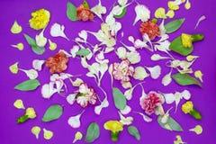 M?ngf?rgade blommor, kronblad och blad av nejlikor p? en purpurf?rgad bakgrund arkivfoto