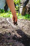 A m?o de uma mulher idosa derrama a terra na sementeira O conceito da jardinagem, vida na terra, estilo imagens de stock royalty free