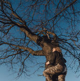 Młoda dziewczyna na drzewie przy zmierzchem Zdjęcia Royalty Free