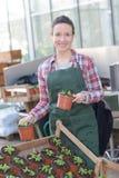 Młoda kobieta pracuje w szklarnianym horticulture Obrazy Stock