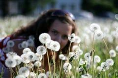Młoda kobieta w polu z wiele dandelions Zdjęcie Royalty Free