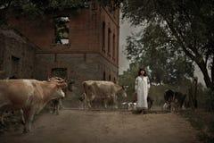 Młoda kobieta w rocznika ubraniowym krajowym stadzie krowy chodzi ac Obraz Royalty Free