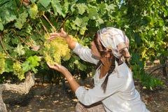 Młoda kobieta, winogradu hodowca w winnicy, Fotografia Stock