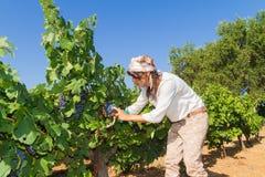 Młoda kobieta, winogradu hodowca w winnicy, Zdjęcia Royalty Free