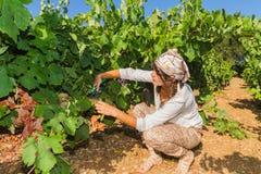 Młoda kobieta, winogradu hodowca w winnicy, Obraz Stock