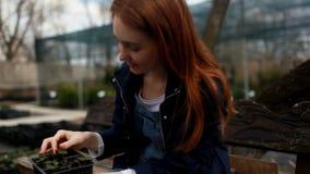 Młoda kobieta wybiera kwiaty dla ogródu zbiory wideo