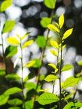M?oda malutka zielona ro?lina opuszcza p?ytk? g??bi? pole pod naturalnym ?wiat?em s?onecznym obraz stock
