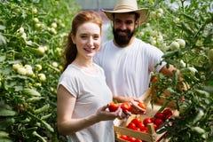 M?oda para rolnicy pracuje w szklarni obrazy royalty free