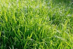 M?oda zielona trawa z kroplami rosa w promieniach ranku s?o?ce fotografia royalty free