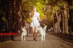 Młodej dziewczyny odprowadzenia puszek ulica z dwa psami Zdjęcia Stock