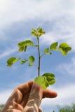 Młody drzewo Obrazy Stock